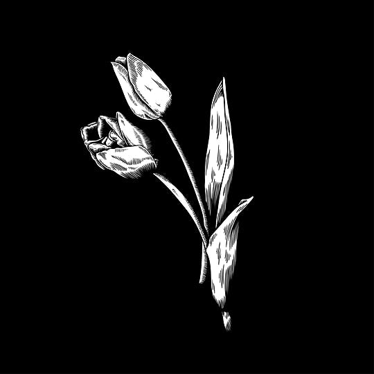 Tulip drawing flower nature vector icon on black background